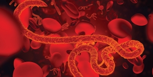 Ebola breakthrough is announced