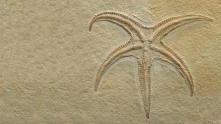 Starfish help solve evolutionary puzzle