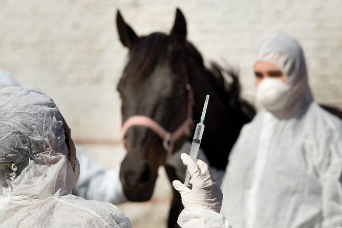 Vaccine offers hope of tackling horse virus