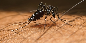 Research deepens understanding of malaria parasite