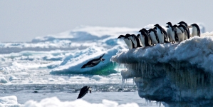 Antarctic Penguin hotspot discovery fuels need for marine reserve